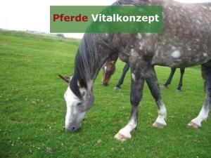 Pferde Vitalkonzept - Pferde auf Weide