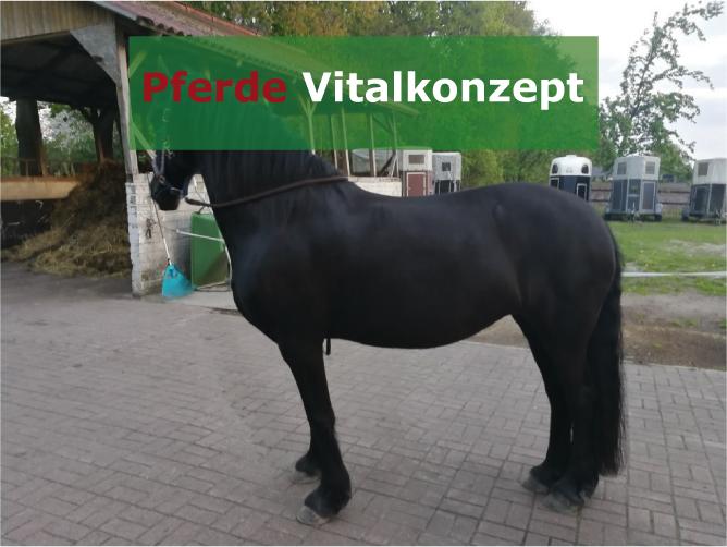 Pferde Vitalkonzept - Motte nachher Vergleichsbild