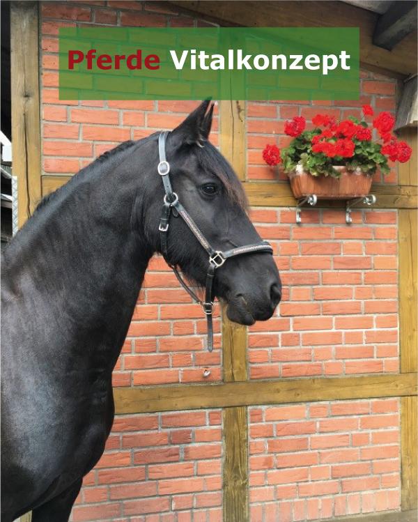 Pferde Vitalkonzept - Motte nachher2