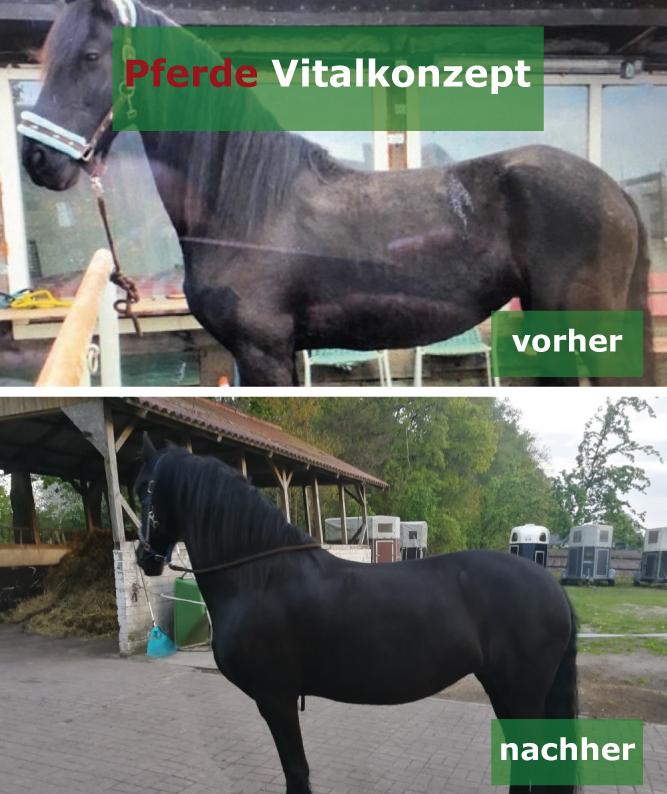 Pferde Vitalkonzept - Motte vorher nachher