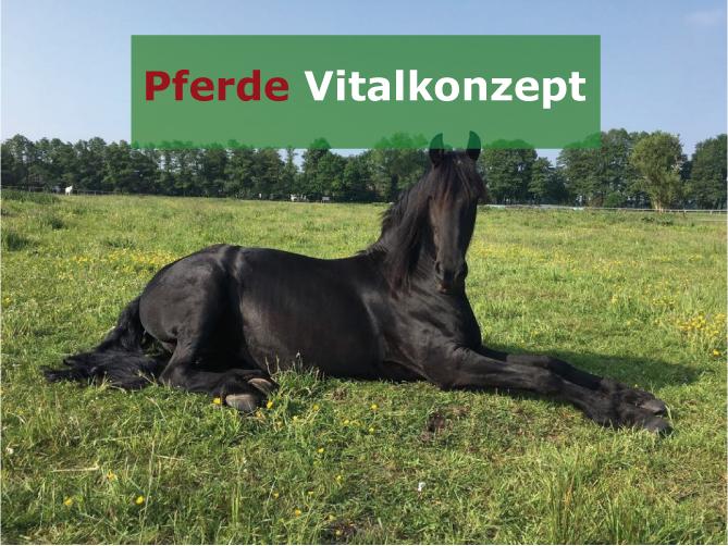 Pferde Vitalkonzept - Motte nachher1