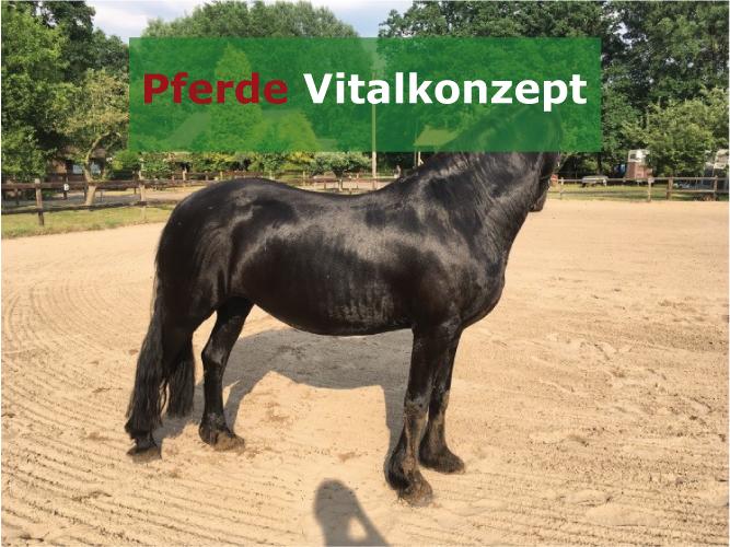 Pferde Vitalkonzept - Motte nachher3