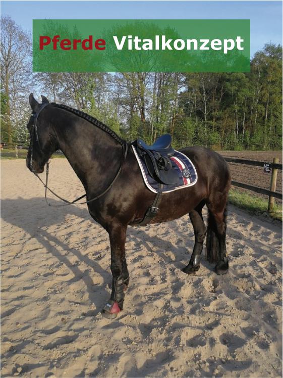 Pferde Vitalkonzept - Motte nachher4