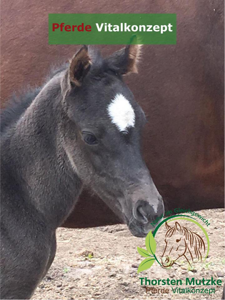 Pferde Vitalkonzept - Fohlen