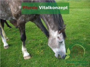 Pferde Vitalkonzept - Weidehaltung