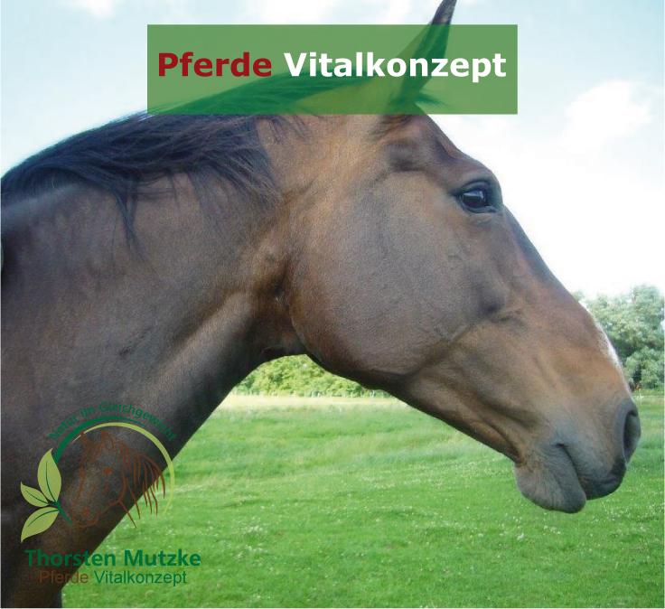 Pferde Vitalkonzept - Kopf