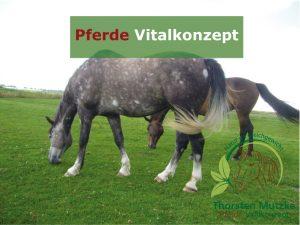 Pferde Vitalkonzept - Pferde Weidehaltung Nordsee